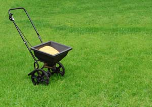 Apopka lawn fertilization