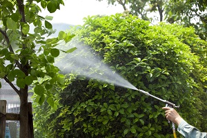 Apopka Shrub Care