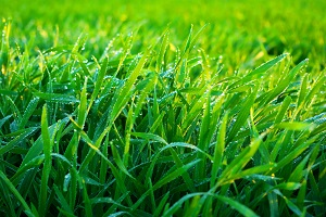 Expert Apopka Lawn Care Specialists