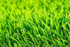 Apopka Florida Lawn Fertilization